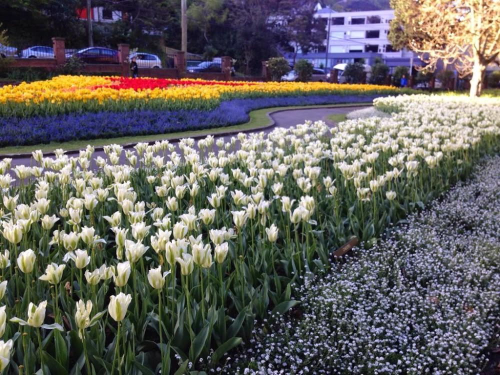 Tulips Botanic Gardens Wellington in Spring