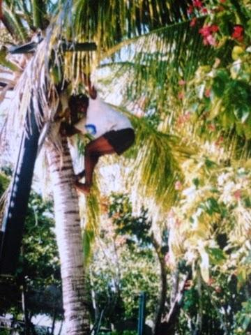 Island Hopping in Fiji coconut tree
