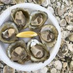 The Bluff Oyster Festival