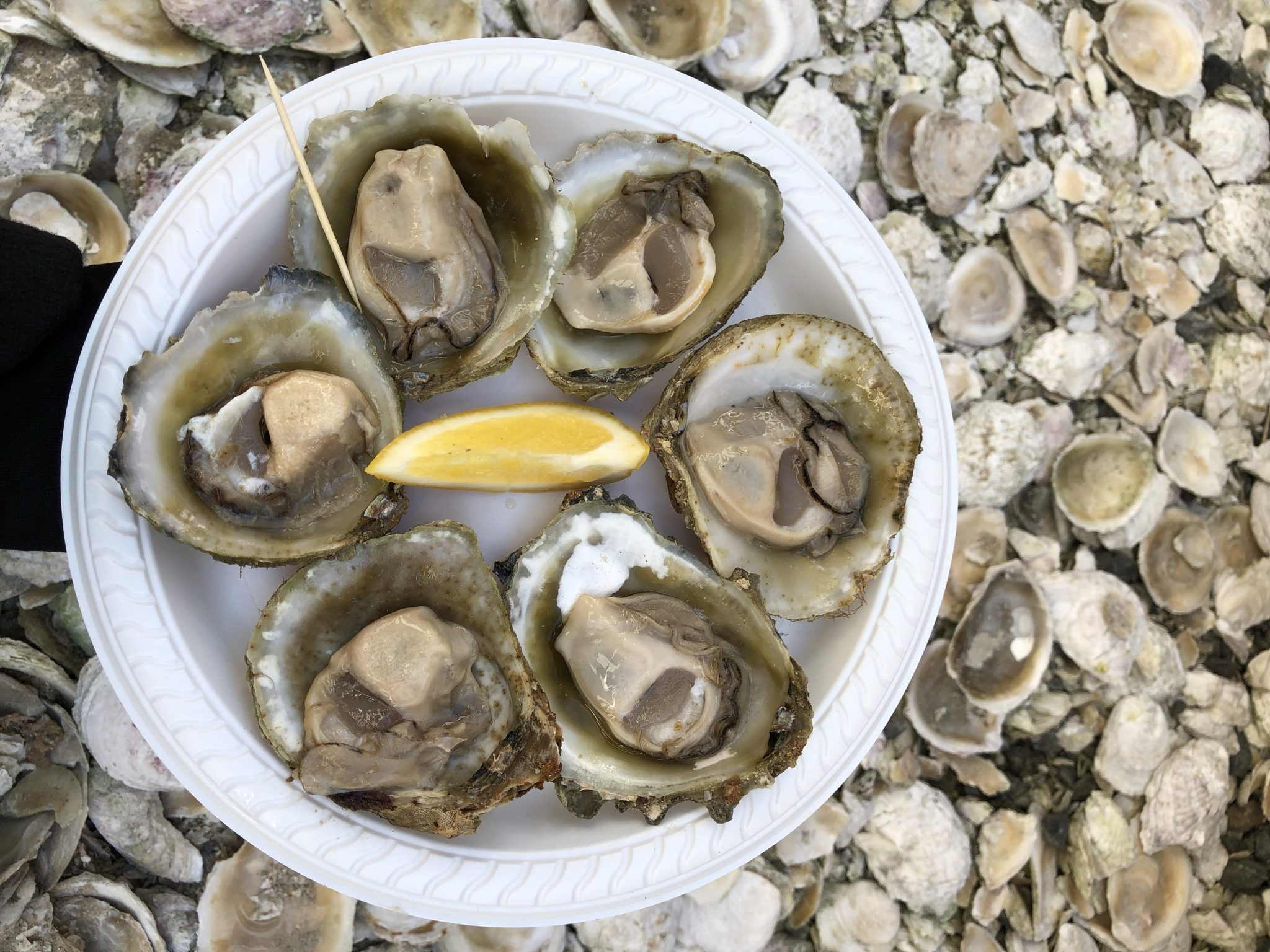 Plate of Bluff Oysters at Bluff Oyster and Food Festival